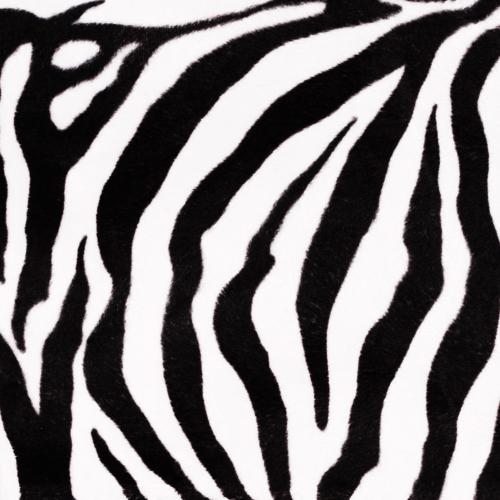 audinys Zebra